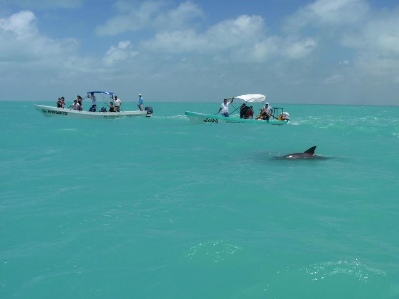 Dauphin - Dolphin - Safaris de Sophie - Sophie Labelle