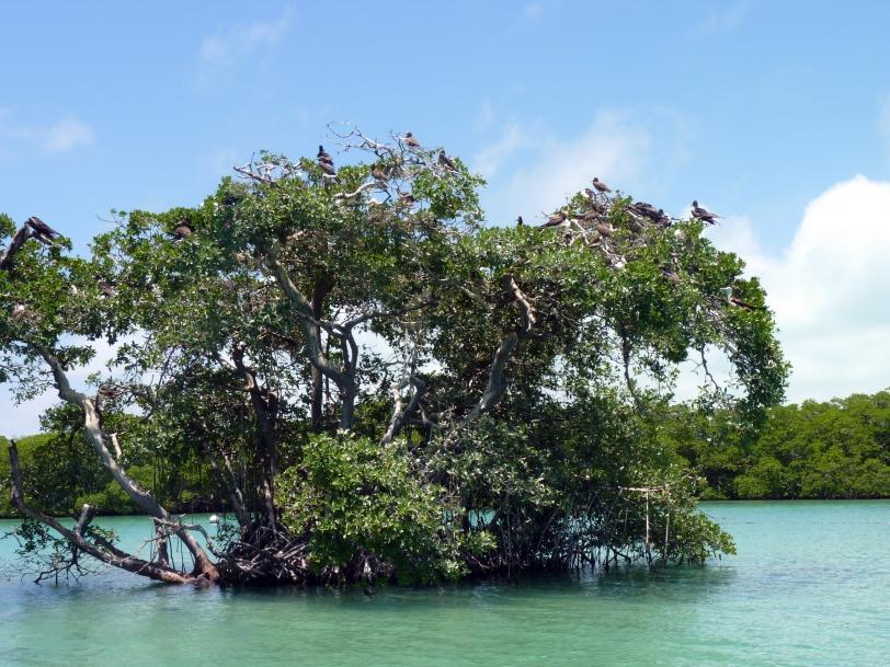 Mangrove - Mexique - Safaris de Sophie - Sophie Labelle